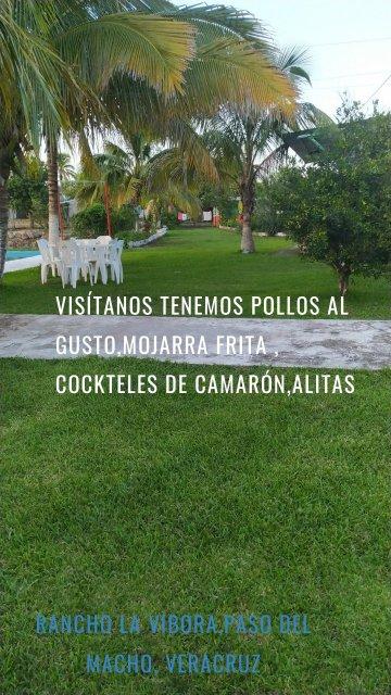 Rancho la vibora,paso del macho, Veracruz Visítanos tenemos pollos al gusto,mojarra frita , cockteles de camarón,alitas